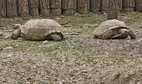 costruiamo un recinto esterno per le tartarughe terrestri