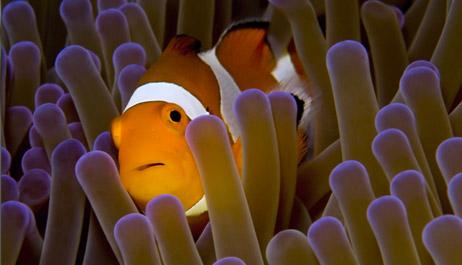 Pesce pagliaccio 4zampe club for Sfondo animato pesci