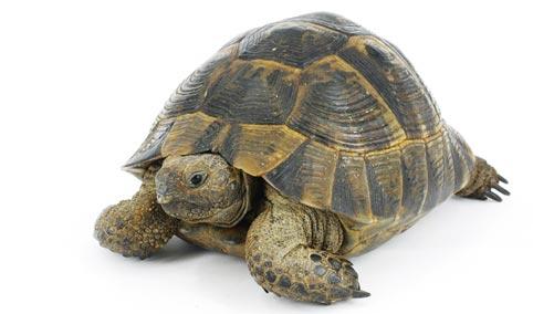 tartarughe di terra 4zampe club